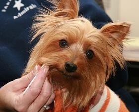 Dna Testing Of Dogs Helping To Nab Owners Who Fail To