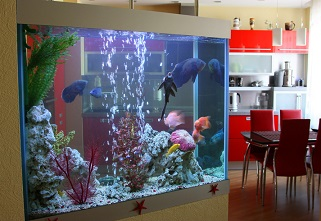 Can You Move Your Aquarium With Fish And Or Water Inside And Other
