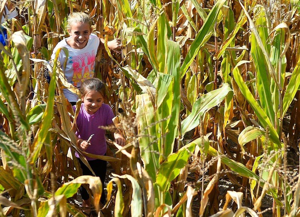 Fall Fun In Cny Where Locals Go For Apple Picking Corn
